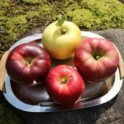 10月のりんごセット